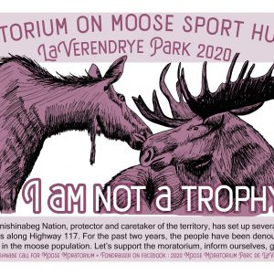Support the Anishnabe call for a Moose Moratorium in Parc La Vérendrye